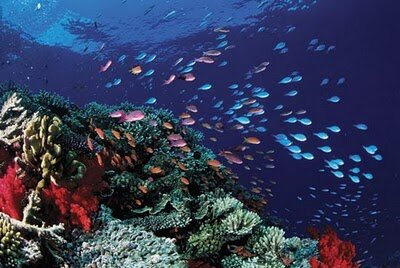 Great barrier reef 10 Interesting Facts About Global Warming