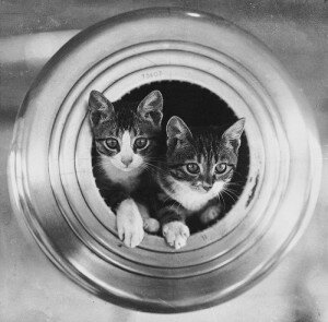 cats on the ships as lucky charm 300x295 10 Interesting Facts About Titanic