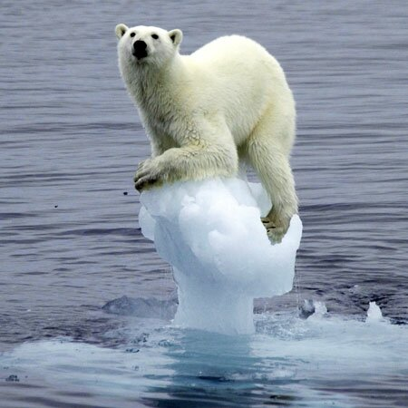 polar bear 10 Interesting Facts About Global Warming