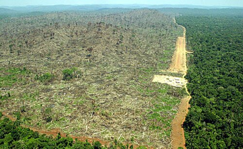 Deforestation facts:  Biodiversity