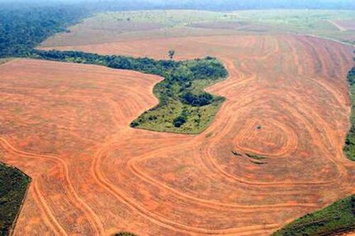 Deforestation facts: Deforestation impact in soil