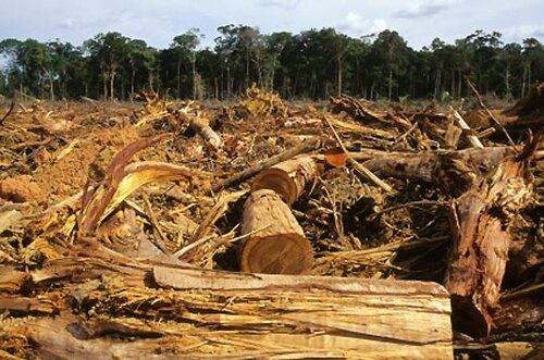 Deforestation facts: Deforestation pace
