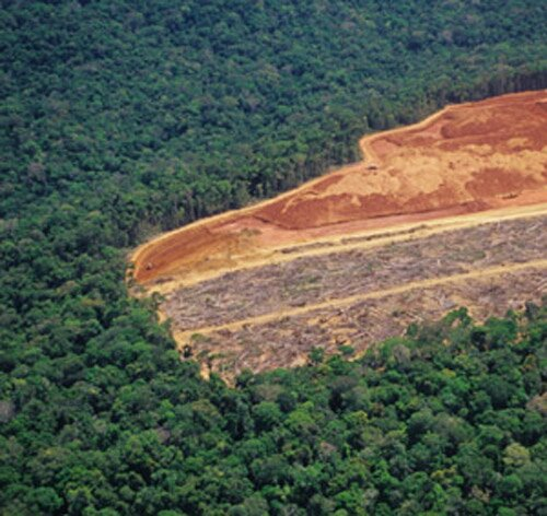 Deforestation facts: Deforestation reason