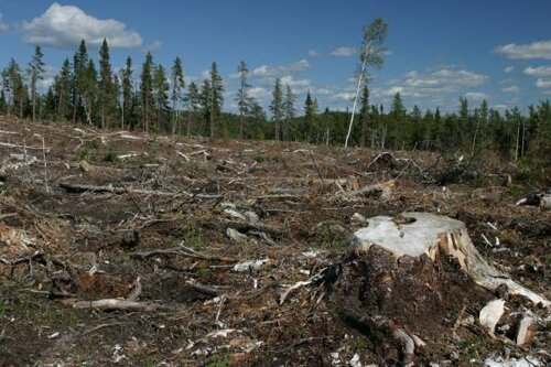 Deforestation facts Effect of deforestation 10 Interesting Deforestation Facts