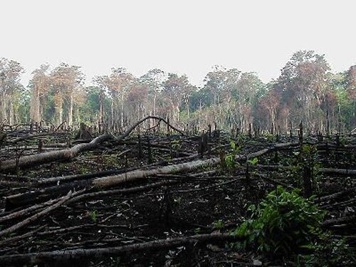 Deforestation facts Function of trees 10 Interesting Deforestation Facts