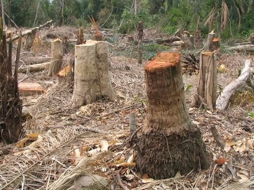 Deforestation facts Importance of wood 10 Interesting Deforestation Facts