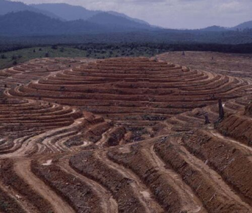 Deforestation facts Water cycle effect 10 Interesting Deforestation Facts