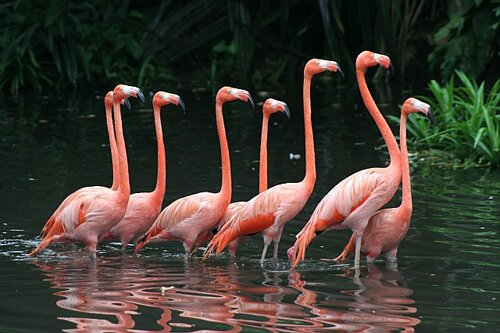 Facts about Florida: Flamingos