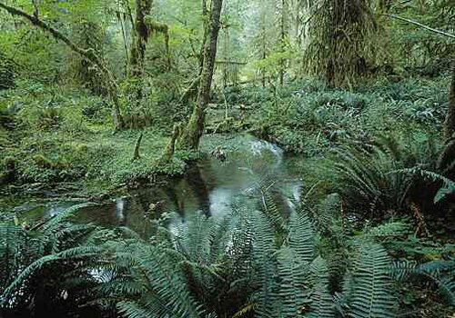 Rainforest facts: Australian Rainforest