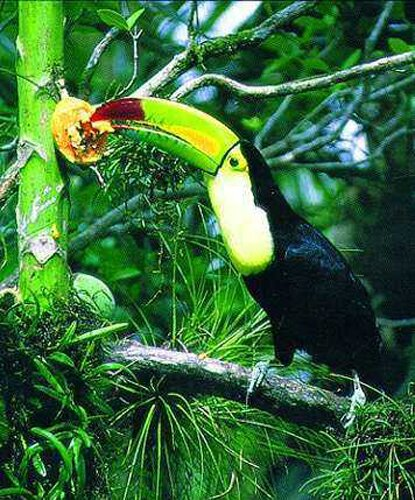 Rainforest facts: Benefit of rainforest