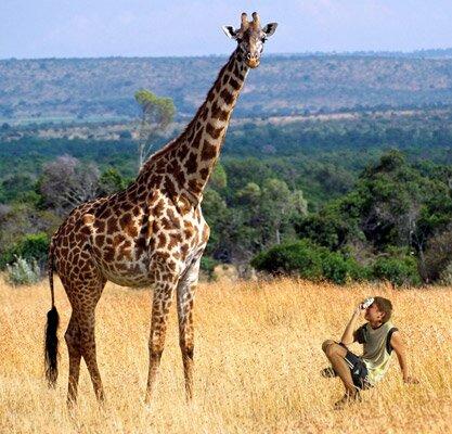 giraffe facts: the walking giraffe