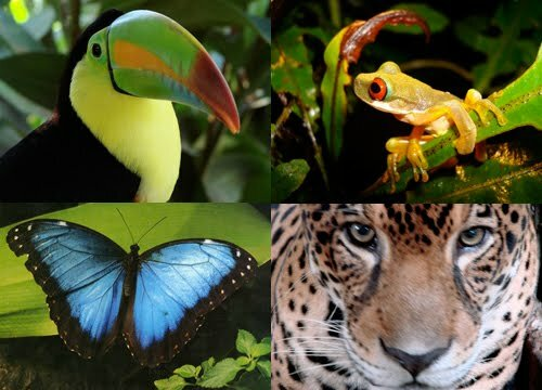 Amazon rainforest facts: Animals