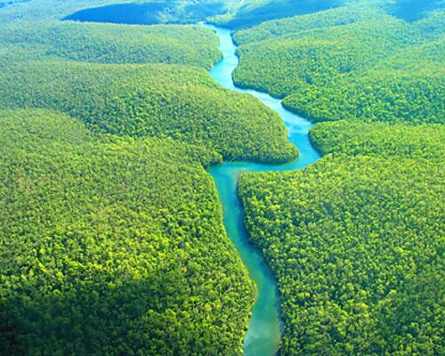 Amazon rainforest facts: Brazil