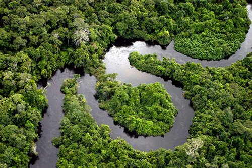 Amazon rainforest facts River