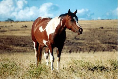 Horse facts Horse Stallion 10 Interesting Horse Facts