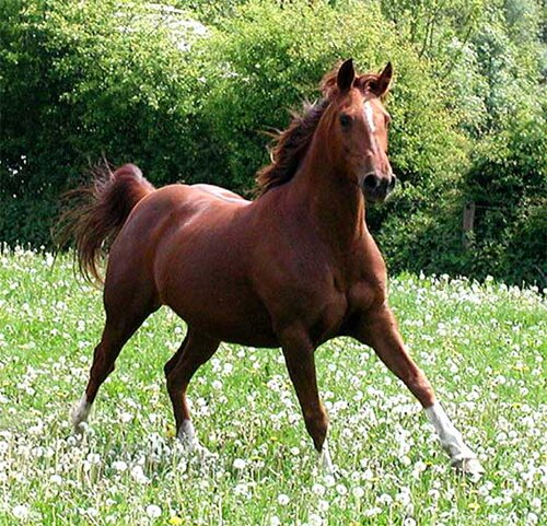 Horse facts Nice Horse 10 Interesting Horse Facts