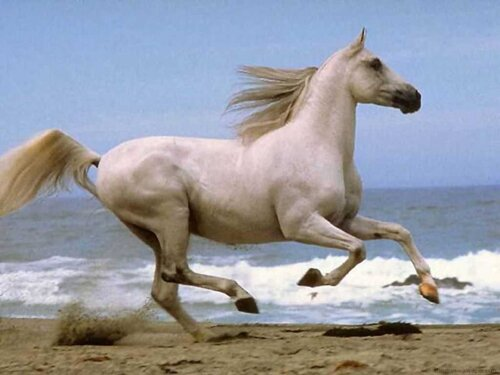Horse facts Running Horse 10 Interesting Horse Facts