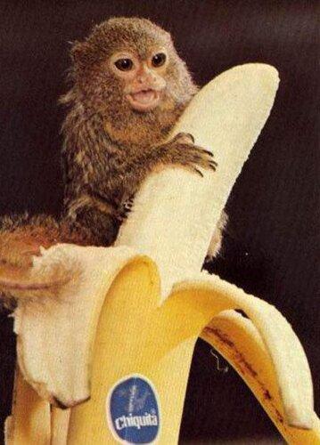 Monkey facts: Monkey and banana