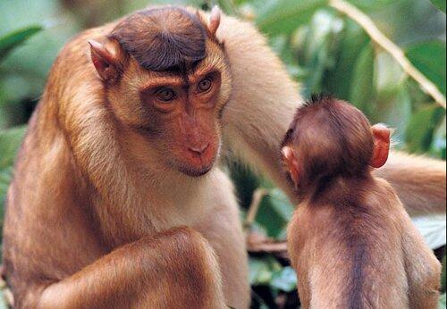 Monkey facts: communcation