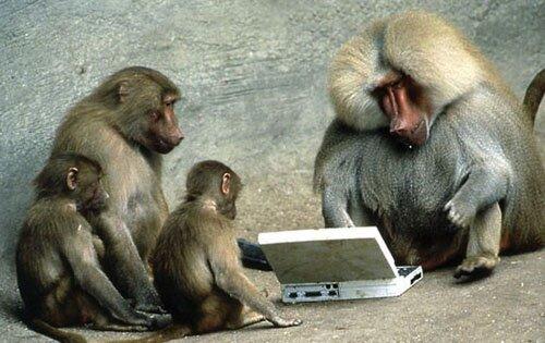 Monkey facts: funny monkey