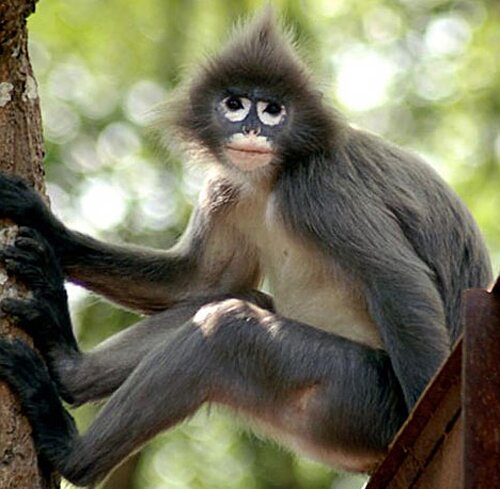 Monkey facts: moneky on the tree
