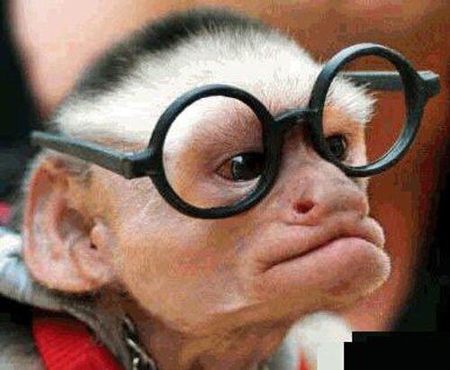 Monkey facts: monkey using glass