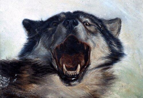 Wolf facts: Wild Wolf