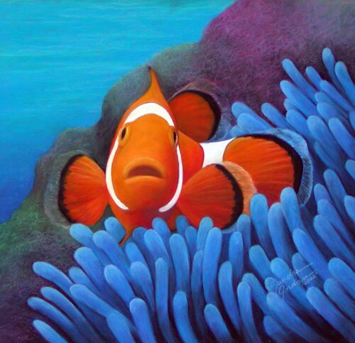 Clown fish facts: Cute Clown Fish