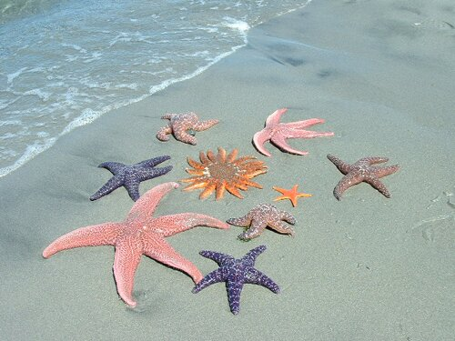 Starfish facts group of starfish1 10 Interesting Starfish Facts