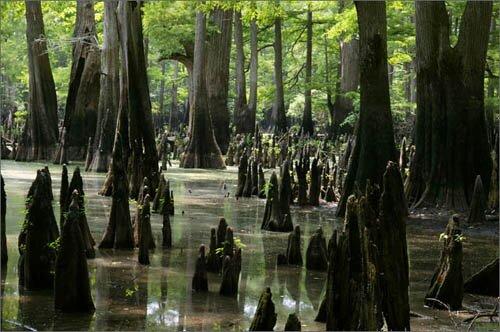 Arkansas facts: National Park