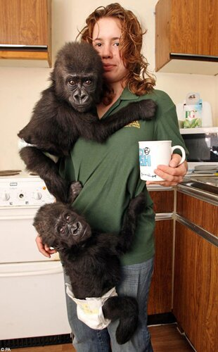 Gorilla facts Gorilla with Human 10 Interesting Facts about Gorilla
