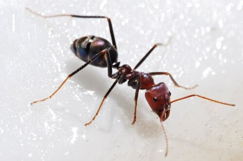 Life facts: ants