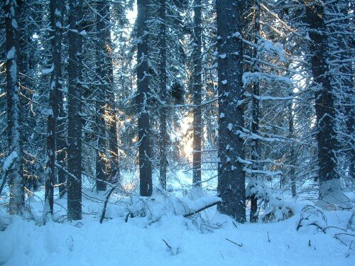 Montana facts: snowflake
