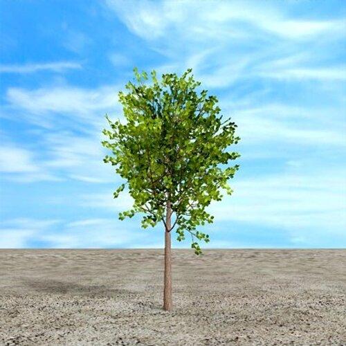 North Dakota facts: American elm
