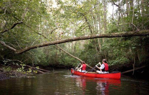 South Carolina facts Edisto River Canoe Kayak Trail 10 Interesting South Carolina Facts