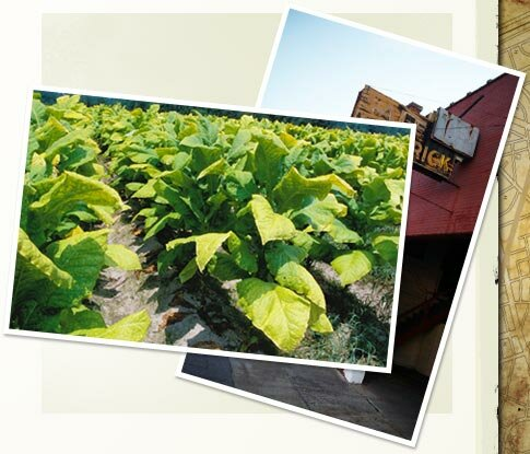 South Carolina facts: Lake City tobacco market