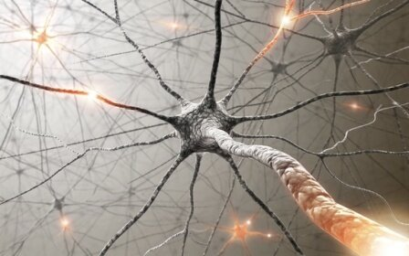 10 Interesting Facts about the Nervous System