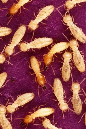 10 Interesting Facts about Termites