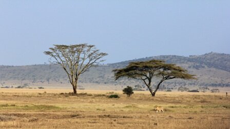 10 Interesting Facts about the African Savanna