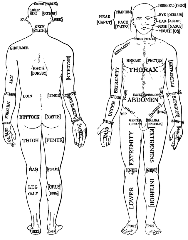 Regions of the body anatomy