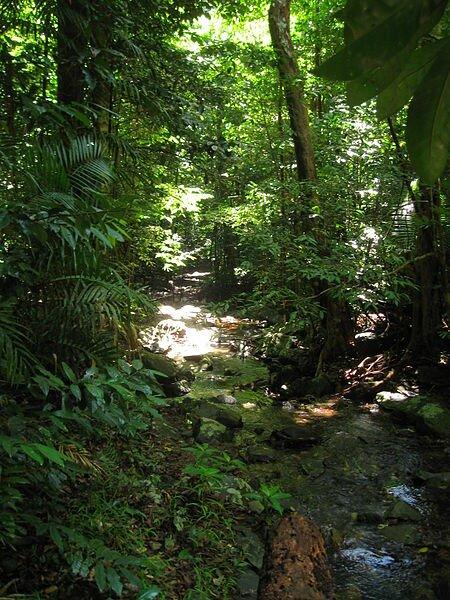 Facts 2 Daintree Rainforest