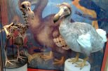 10 Interesting Facts about The Dodo Bird