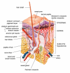 10 Interesting Facts about the Integumentary System