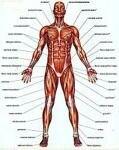 10 Interesting Facts about the Muscles