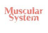 10 Interesting Facts about the Muscular System