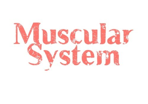 10 interesting facts about the muscular system | in fact collaborative, Muscles