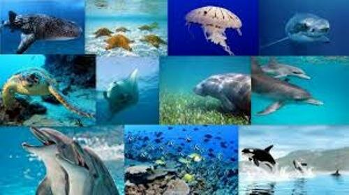 The Marine Biome Animals