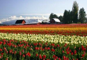 The Skagit Valley
