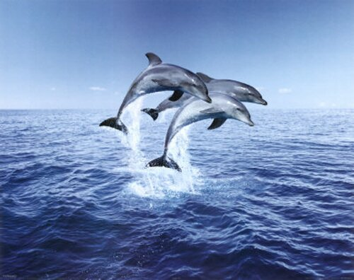 Dolphin facts: Dolphin and its intelligence