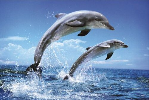 Dolphin facts: Dolphin and its sense of hearing
